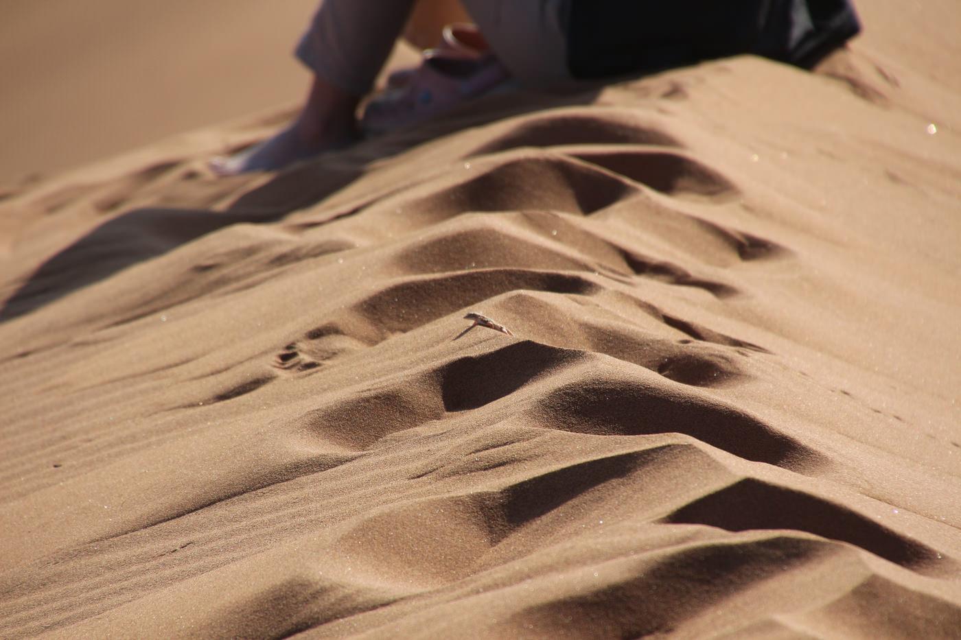 砂漠にいるトカゲ