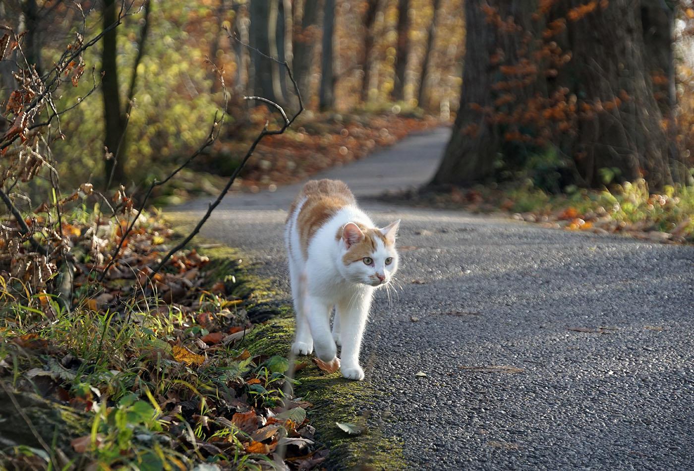散歩道と猫