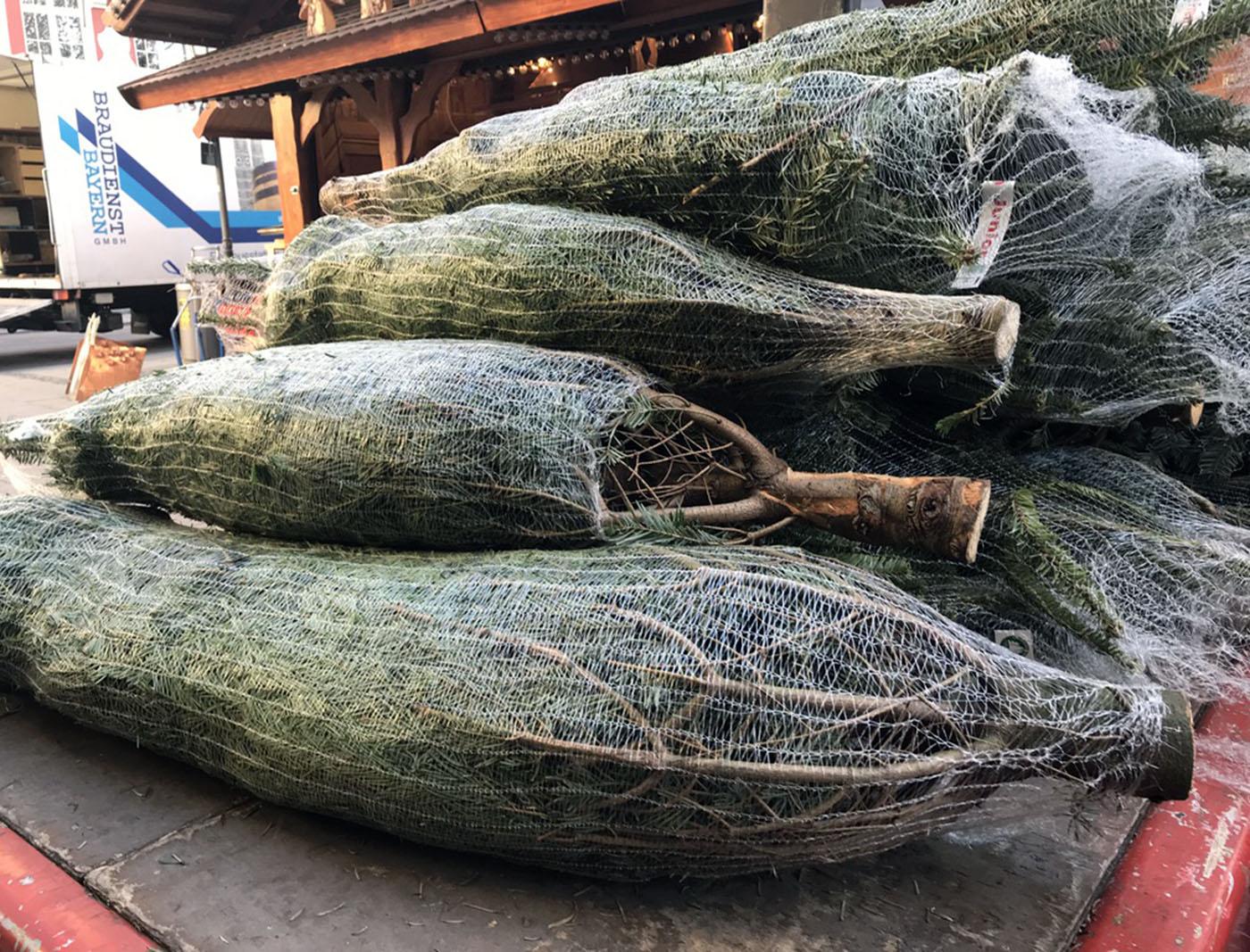 ヴィクトアリエン市場クリスマスツリー