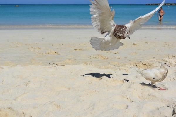 カイルアビーチ2