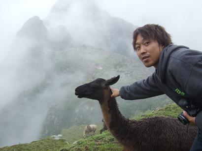 Llama_taro