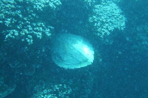 ボラボラ島のカメ
