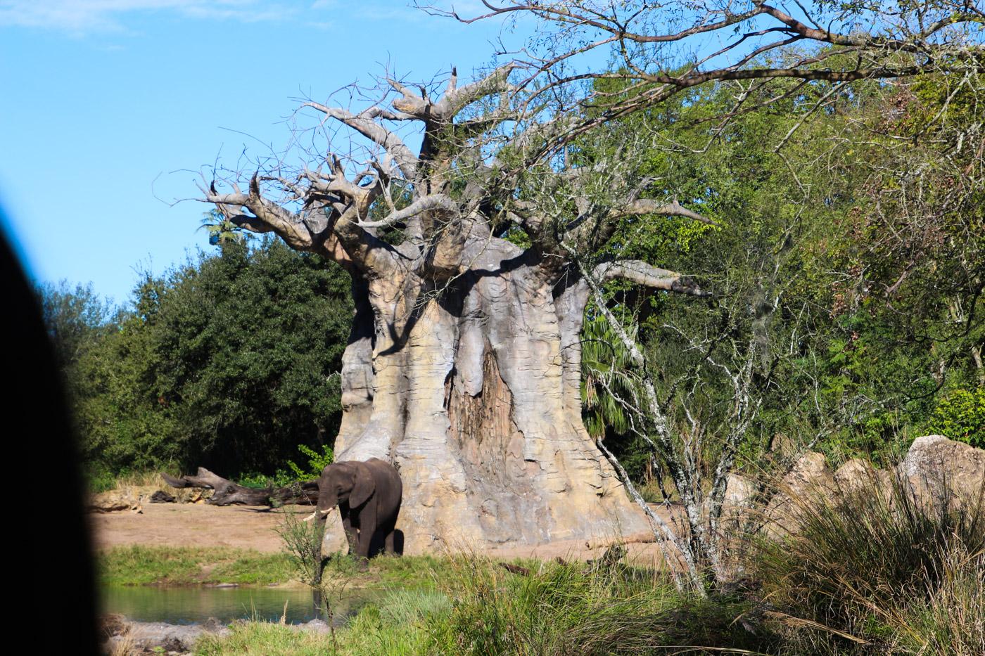 象とバオバブ