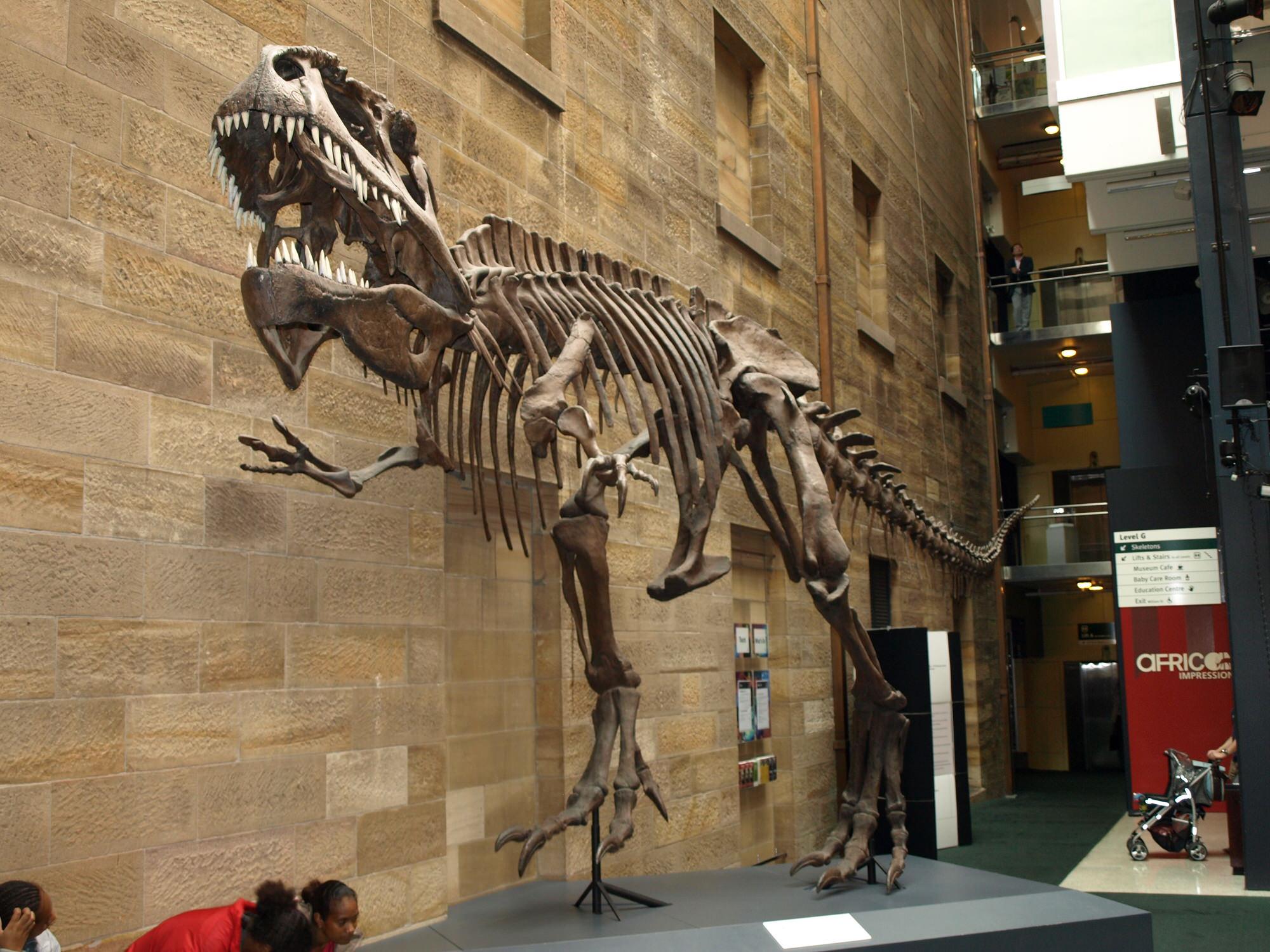 australia-museum