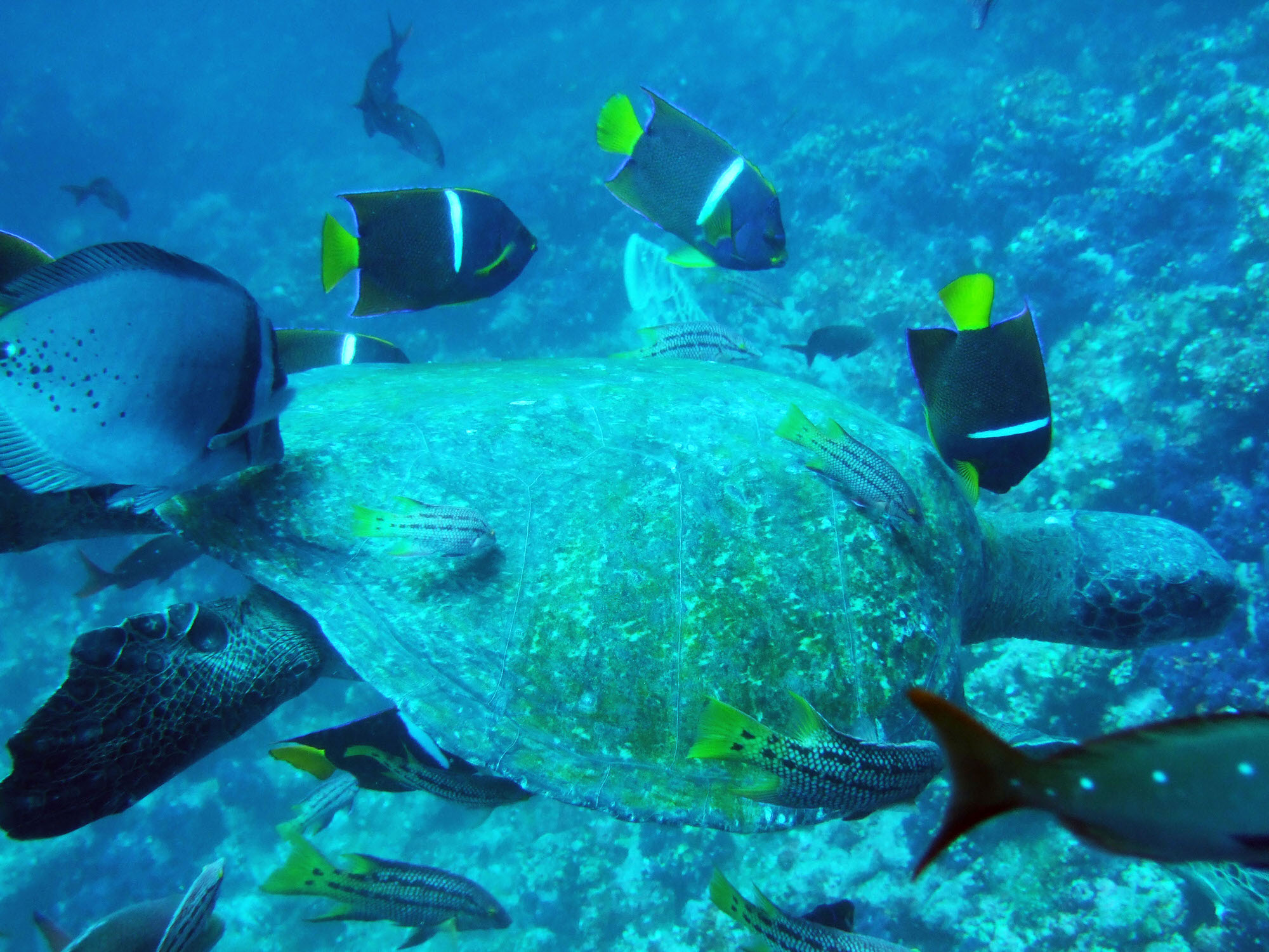 galapagos-diving