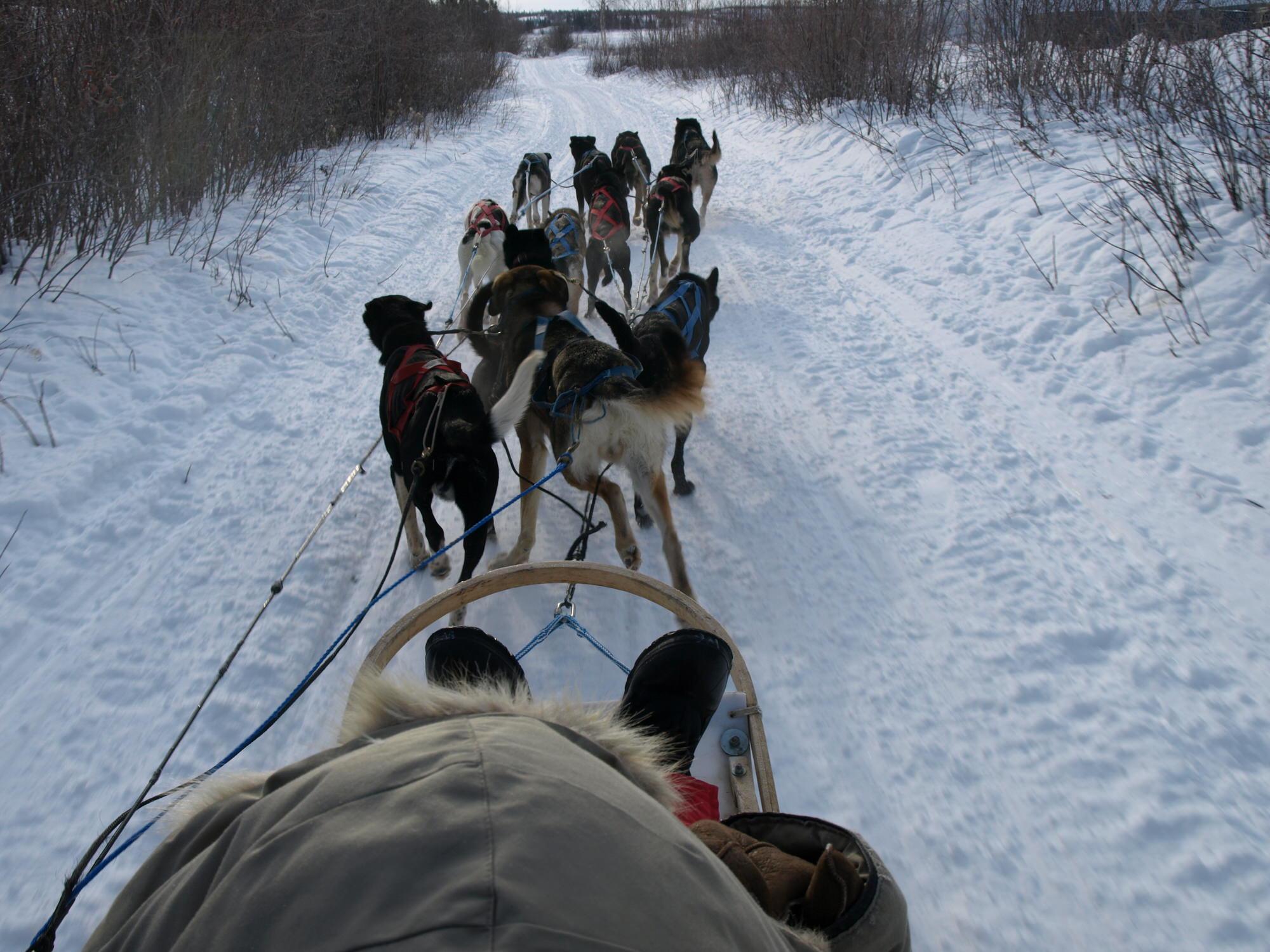 dog-train