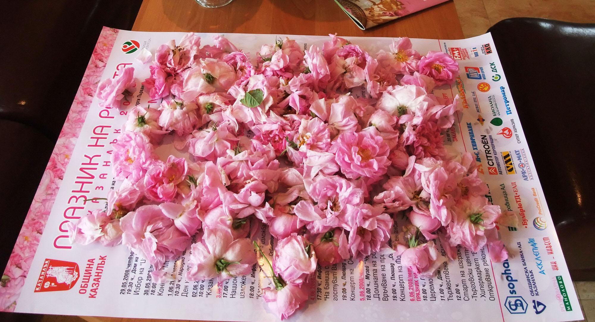 rose-damascena