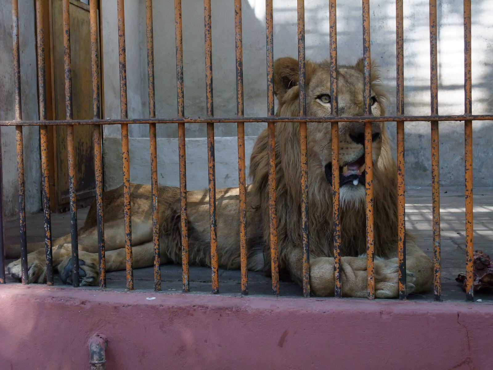 cairo zoo