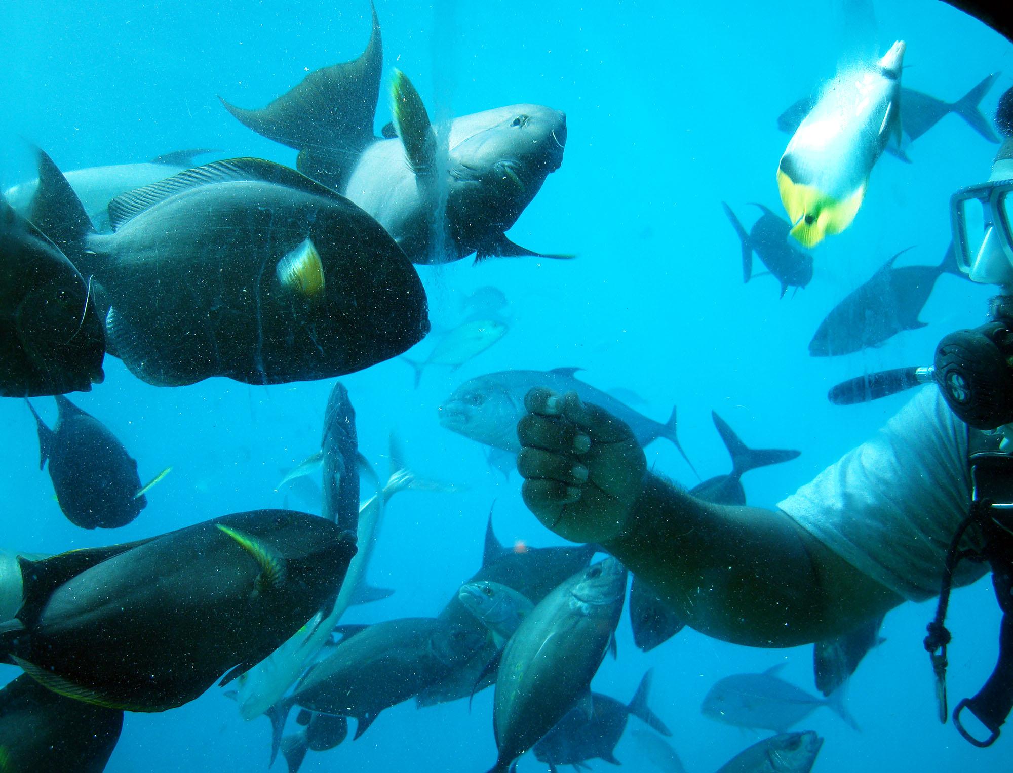 guam-snorkel