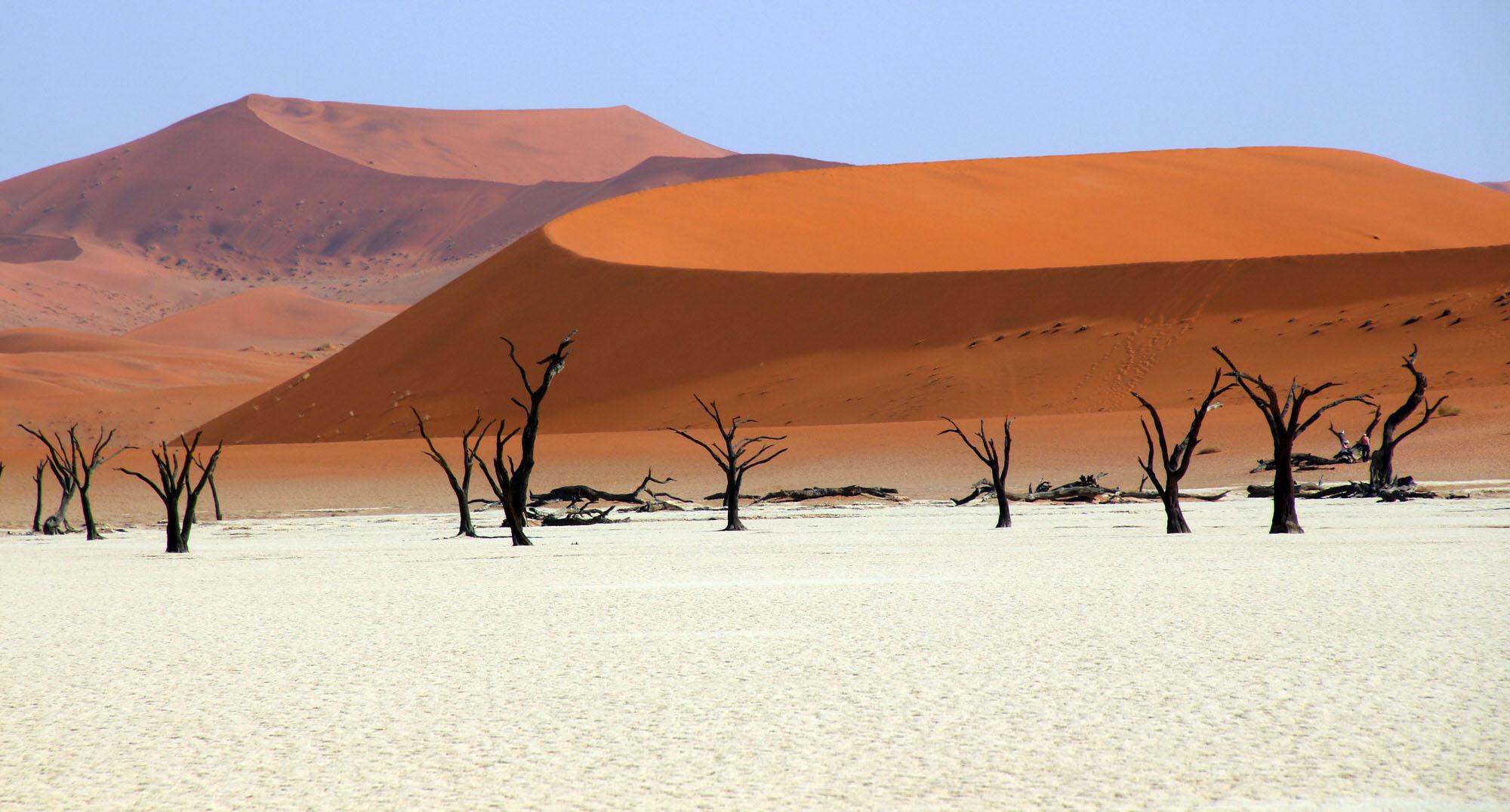 枯れ木の多いナミブ砂漠