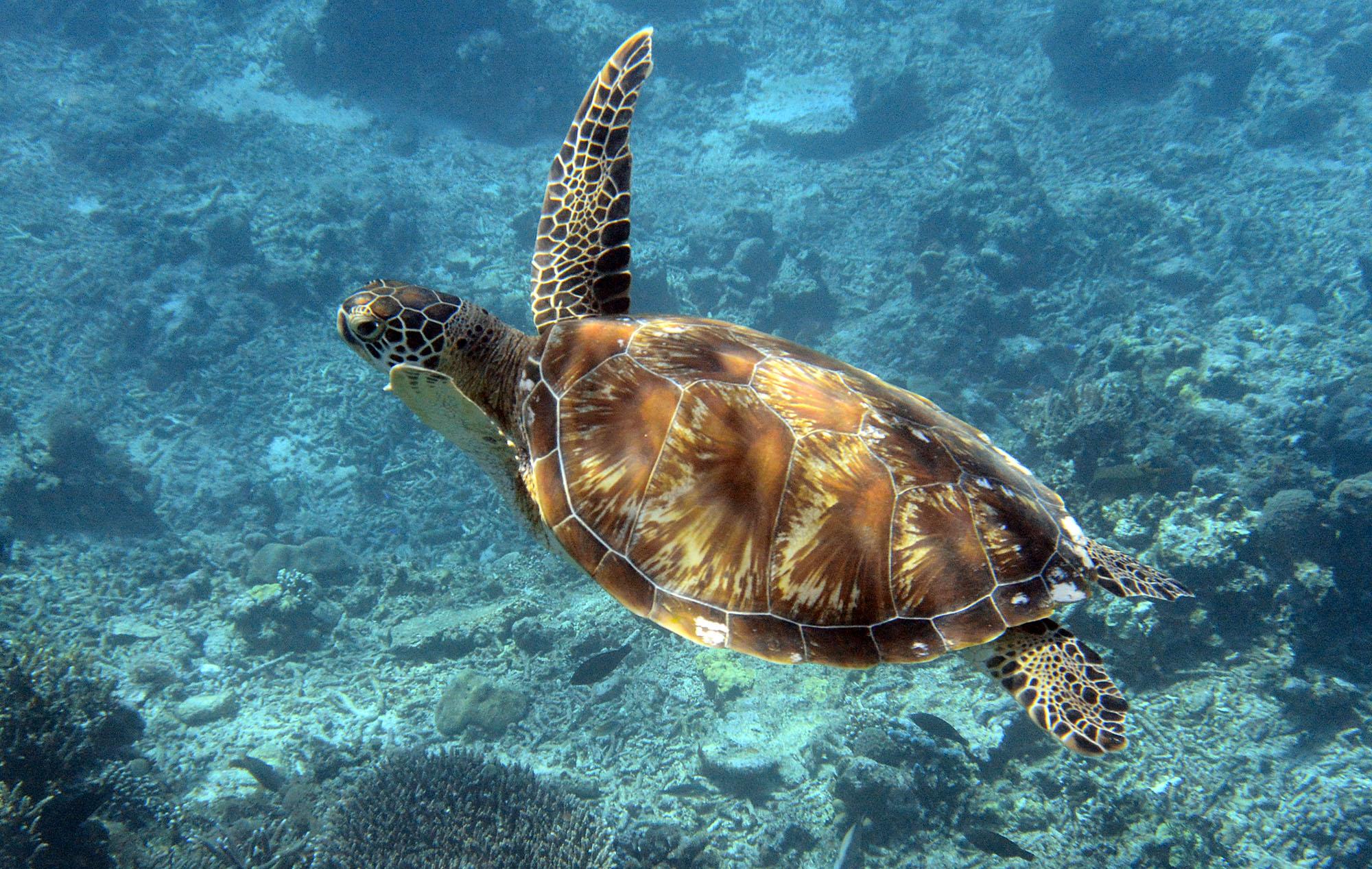 gili-snorkel