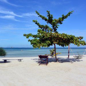 パンガン島 素朴なビーチで犬と過ごした日々